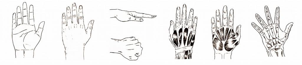 Worksheet. Como dibujar manos paso a paso manga  IlustraIdeas